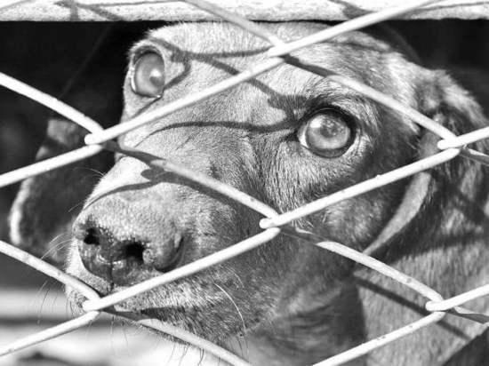 Какие преступления против животных на Кубани остались без наказания