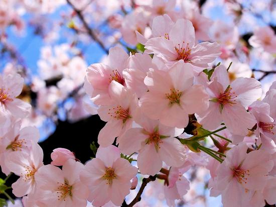 Весна постепенно приходит на Кубань