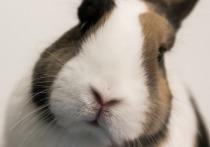 ЧП в контактном зоопарке: кролик Барашек укусил мать и дитя
