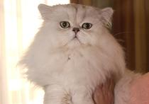 В Москве кошка подковала себя канцелярскими кнопками