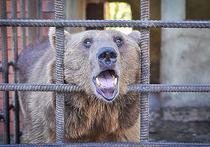 Сочинских медведей-алкоголиков готовы вывезти в Трансильванию