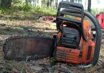 Задержаны гастарбайтеры, обрушившие дерево на коляску с младенцем